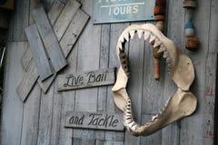 Dentes do tubarão Imagem de Stock Royalty Free