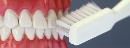 Dentes e escova de dentes falsificados imagens de stock royalty free