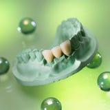 Dentes falsos Fotografia de Stock Royalty Free