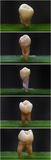 Dentes humanos naturais Foto de Stock Royalty Free