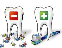 Dentes saudáveis Imagens de Stock