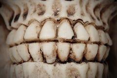 Dentes sujos Imagem de Stock Royalty Free