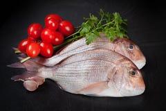 Dentex Fish Stock Images