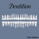 dentição ilustração stock