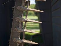 Denti d'acciaio di vecchio falciatore dell'azienda agricola Fotografie Stock Libere da Diritti