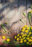 Denti di leone su vecchio fondo di legno Fotografie Stock