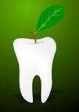 Denti e foglio Immagine Stock