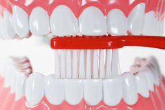 Denti e spazzola Immagine Stock