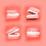 Denti o illustrazione del dente, viste di prospettiva in bocca Immagine Stock