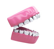 Denti permanenti, dentatura adulta Immagini Stock