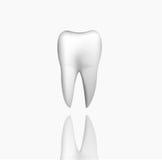 Denti realistici Fotografia Stock Libera da Diritti