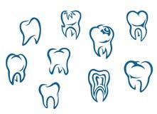 Denti umani impostati Immagine Stock
