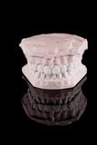 Denti umani, modello Fotografia Stock Libera da Diritti
