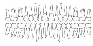 dentición Fotos de archivo