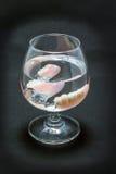 Dentier partiel dans un verre de l'eau Photos stock