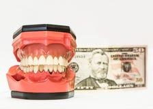 Dentiers dentaires d'isolement sur le blanc Photos libres de droits
