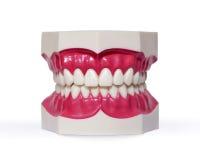 Dentiers en plastique sur le blanc Photographie stock libre de droits