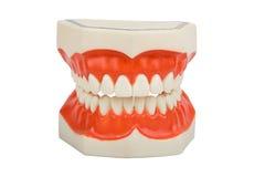 Dentiers, prothèse dentaire Images libres de droits