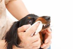 Dentifrice Images libres de droits