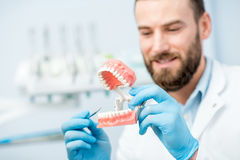 Dentist with artificial jaw. Handsome dentist showing artificial jaw at the dental office royalty free stock photography