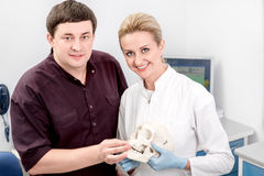Dentist with assistant in the dental office. Dentist with assistant talking and holding artificial jaw in the dental office Stock Image