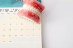 Dentist demonstration teeth model on calendar Stock Images