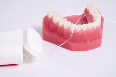 Dentist demonstration teeth model and dental floss on white back Royalty Free Stock Photo