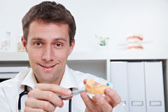 Dentist with dental cast. Smiling dentist in office showing dental cast royalty free stock photography
