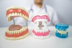 Dentist demonstrate  to clean teeth. Dentist with dental model demonstrate  to clean teeth Royalty Free Stock Photo
