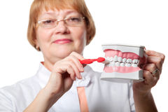 Dentist with denture for demonstration Stock Photo