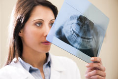 Dentist Examining X-Ray. Portrait of a female dentist examining x-ray Stock Photos