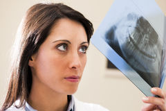 Dentist Examining X-Ray. Portrait of a female dentist examining x-ray Royalty Free Stock Photos