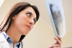 Dentist Examining X-Ray. Portrait of a female dentist examining x-ray Royalty Free Stock Images