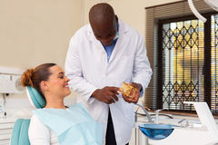 Dentist explaining teeth model Royalty Free Stock Photo