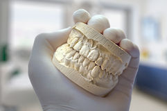 Dentist hand show model teeth Stock Photography