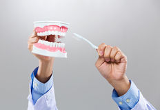 Dentist hold with denture and toothbrush Stock Photo