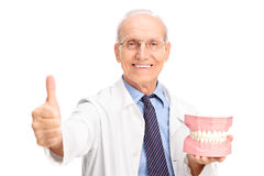 Dentist holding a big denture and giving thumb up Royalty Free Stock Image