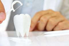 Dentist holding dental floss with molar Royalty Free Stock Image