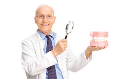 Dentist holding denture and a magnifying glass. Joyful mature dentist holding a denture and a magnifying glass and looking at the camera isolated on white Royalty Free Stock Photo