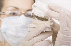 Dentist holding denture model, correction of bite Stock Photo