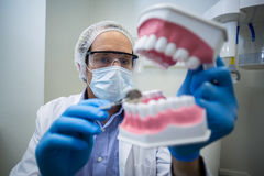 Dentist holding and examining a mouth model Royalty Free Stock Photos