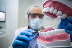 Dentist holding and examining a mouth model Stock Photo