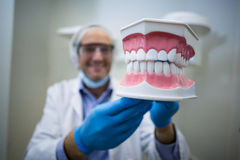 Dentist holding a mouth model Royalty Free Stock Images