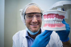 Dentist holding a mouth model Stock Image