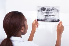 Dentist looking at jaw xray. Smiling female dentist looking at jaw Xray in clinic stock image