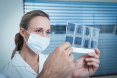 Dentist looking at x-ray Royalty Free Stock Image