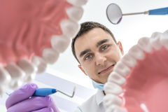 Dentist looks through jaw models. Smiling dentist looks through the tooth jaw models. Man holds a dental bur and a mirror. He wears lilac gloves and a blue stock photography