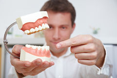Dentist pointing to teeth model Stock Images