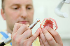 Dentist polishes artificial jaw in dental clinic Royalty Free Stock Photography