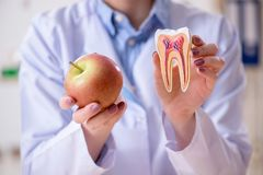 The dentist practicing work on tooth model Stock Photos
